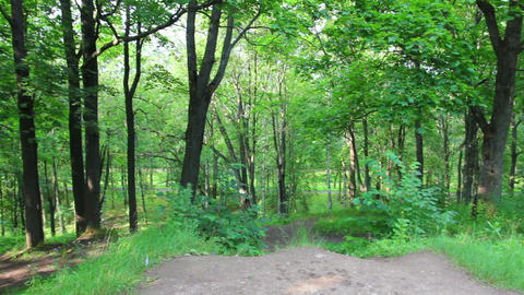 summer woods on Parnas hill in Pushkin park - St. Stock Video Footage
