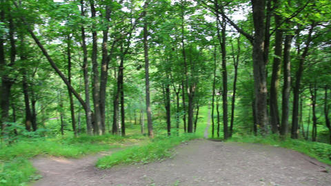 summer woods on Parnas hill in Pushkin park - St.  Footage