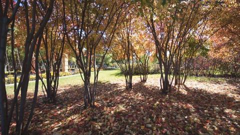 Autumn day in Longbin park (pan) Stock Video Footage