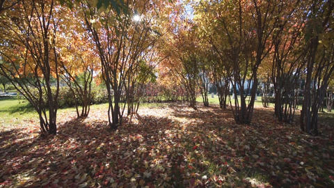 Autumn day in Longbin park (pan) Stock Video Footage
