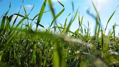 Green Field Stock Video Footage