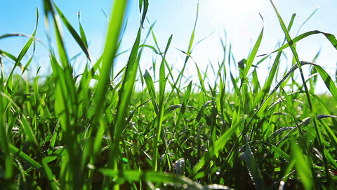 Green Grass Stock Video Footage