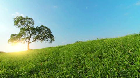Summer Landscape stock footage