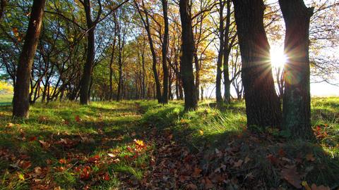 Autumn Footage