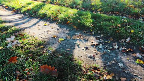Autumn Shadows Footage
