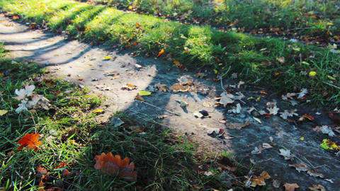 Autumn Shadows Stock Video Footage