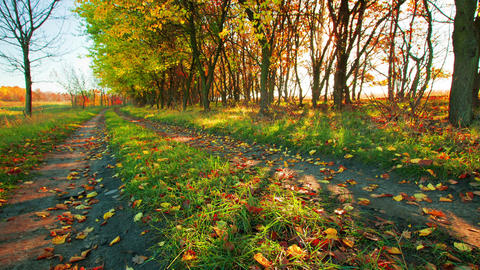 Autumn Road stock footage