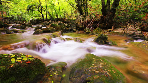 Forest Stream Footage