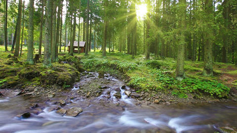 Forest Stream Stock Video Footage