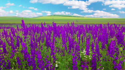 Field Of Flowers Stock Video Footage