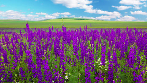 Field Of Flowers Footage