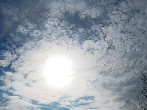Sun through clouds on background of branches. Time Stock Video Footage