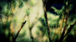 Spiders Web Footage