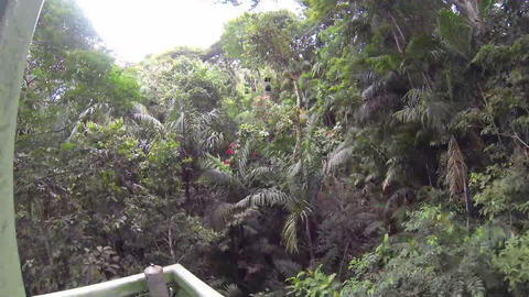Beautiful view inside the virgin jungle Stock Video Footage