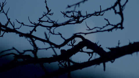 Branches aganst moon Stock Video Footage
