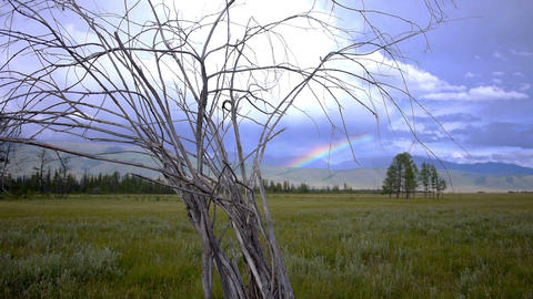 Dead Tree Steppe and the Rainbow Stock Video Footage