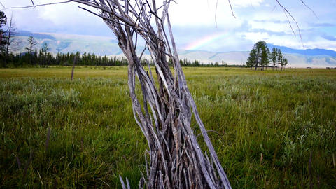 Dead Tree Steppe and the Rainbow Footage