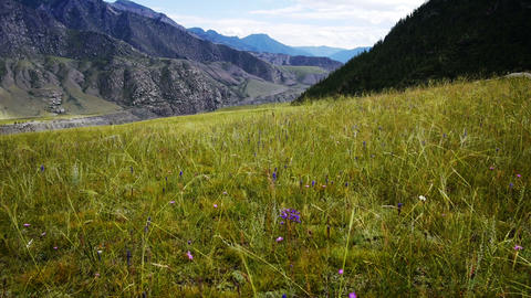Grass meadow in the mountains Stock Video Footage