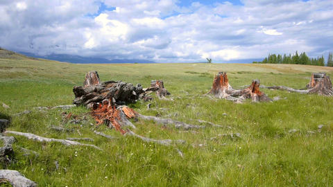 Stumps of trees in the steppe Stock Video Footage