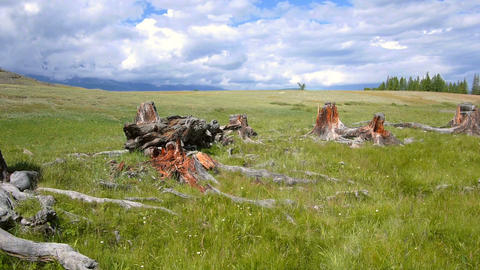 Stumps of trees in the steppe Footage