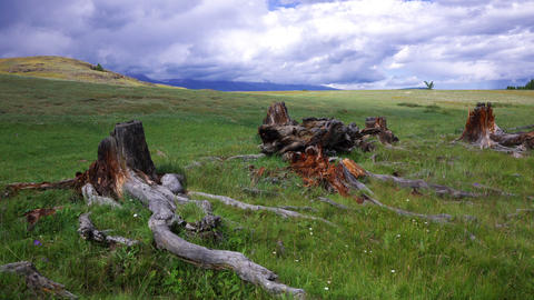 Time Lapse Stumps and Snags in steppe Stock Video Footage