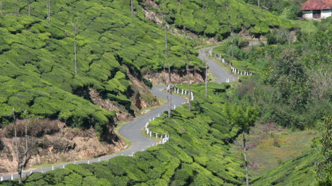 road between tea plantations in Munnar Kerala Indi Stock Video Footage