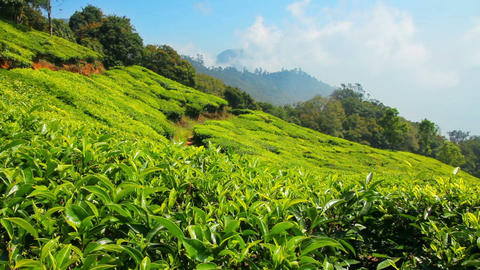 mountain tea plantation in Munnar Kerala India Stock Video Footage