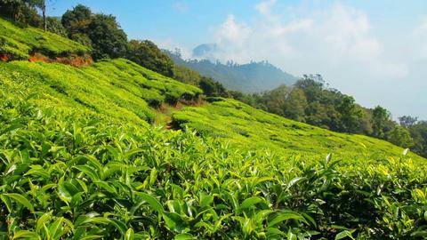mountain tea plantation in Munnar Kerala India Stock Video Footage