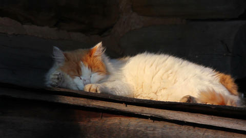 sleeping cat outdoors Stock Video Footage