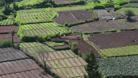peasants working in vegetable gardens in India Stock Video Footage