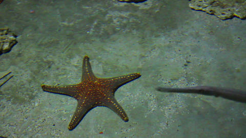 starfish and rays in shallow Stock Video Footage