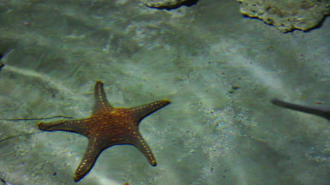 starfish and rays in shallow Footage