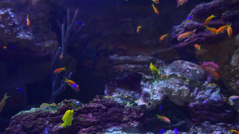 fish and corals underwater Stock Video Footage