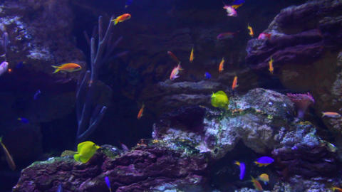 fish and corals underwater Footage