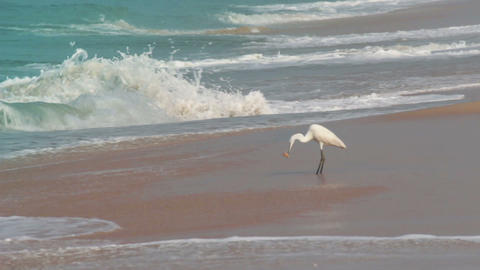 hunting heron on beach Stock Video Footage