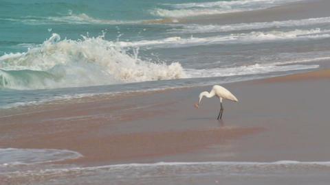 hunting heron on beach Stock Video Footage