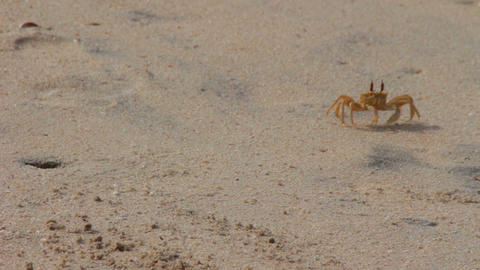 shy crab on the beach Stock Video Footage