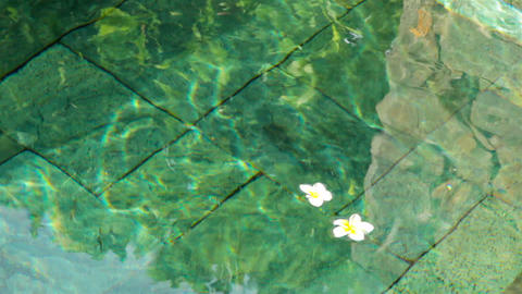 flowers in water Footage