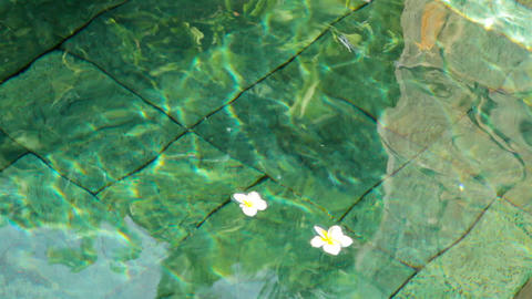 flowers in water Stock Video Footage