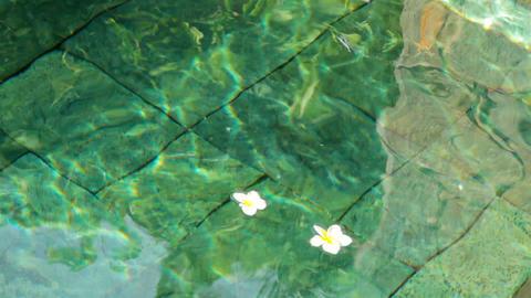 flowers in water Stock Video Footage