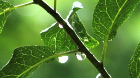 rain drops on green leaves Stock Video Footage