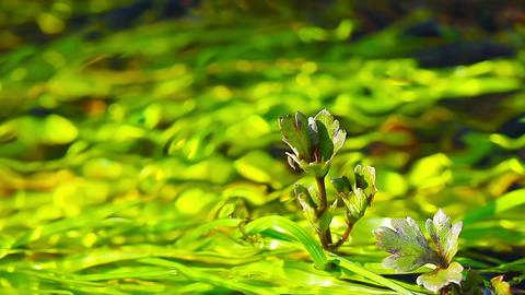 spring brook Footage