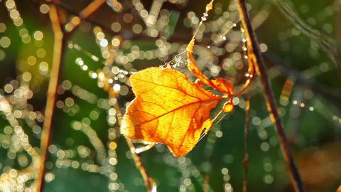 autumn leaf Stock Video Footage