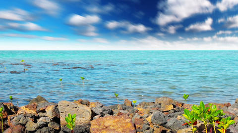 ocean landscape Stock Video Footage