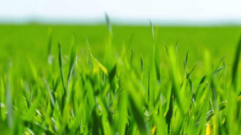 green grass Stock Video Footage