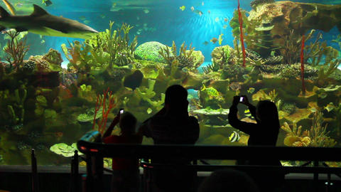 people shooting in oceanarium Stock Video Footage