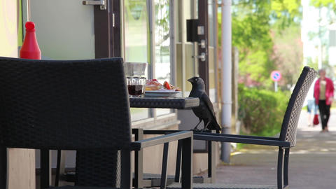 pair of jackdaws lunch Stock Video Footage