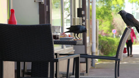 Pair Of Jackdaws Lunch stock footage