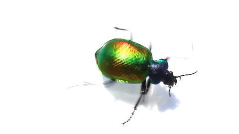 large green beetle running macro Stock Video Footage