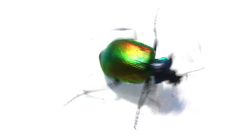 large green beetle running macro Stock Video Footage